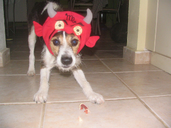 Dog dressed up in demon costume